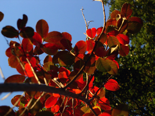 Your Leaves Are On Fire by Jason A. Samfield