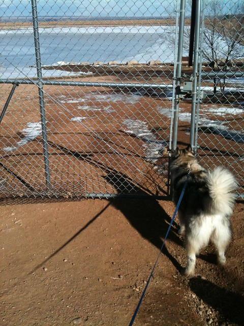 Poor Luka - the swimming hole is frozen and locked