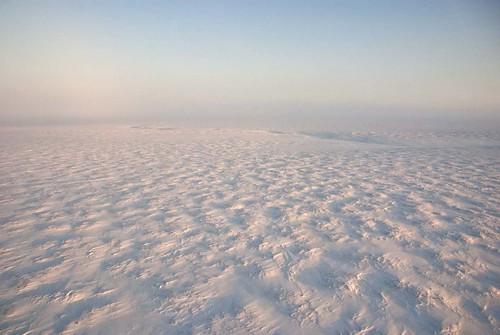 White Tundra
