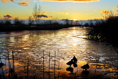 Winter Marsh at Sunset