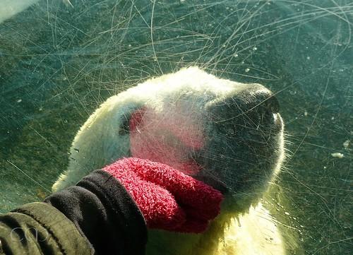 Knut 10 January 2011