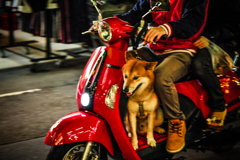 Zhonghua Night Market Scooter Shiba | Nikon D700 85mm 5.6 1/125 ISO 3200