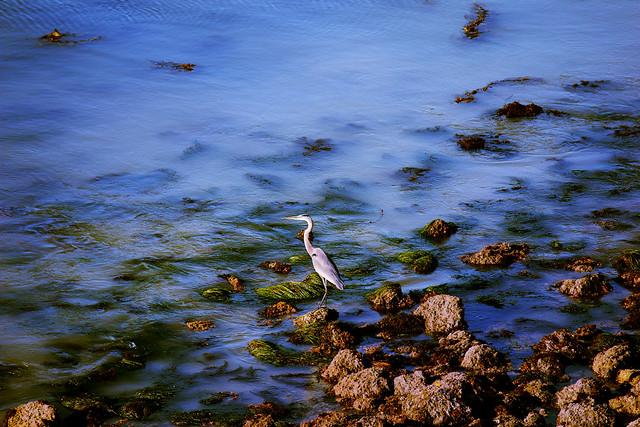 Catalina November