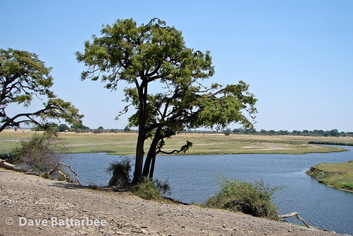 Chobe Riverbank