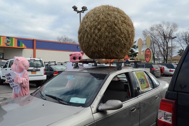 PETA Pigs + the 99% Hayball = New Hampshire Primaries Protests