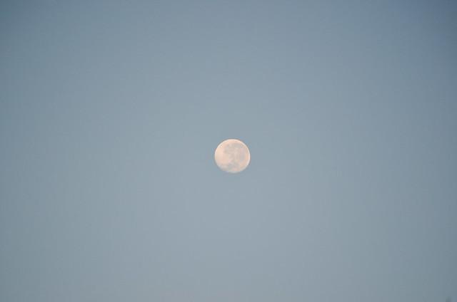 Morning moon-1