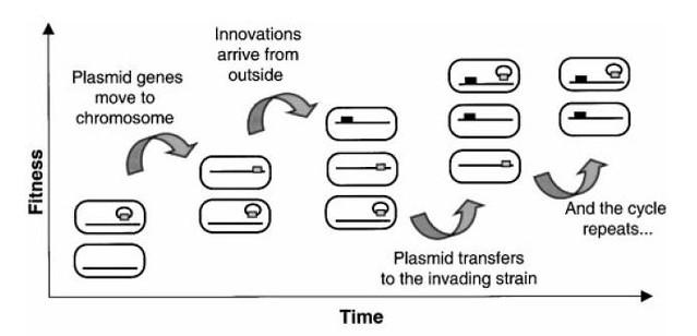 plasmidsweep2
