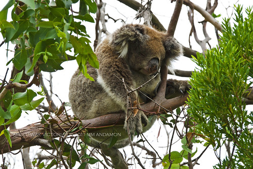 shushh...[Cape Otway National Park]