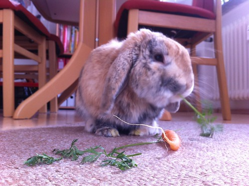 Snoopy feasting on a carrot - 10.02.12