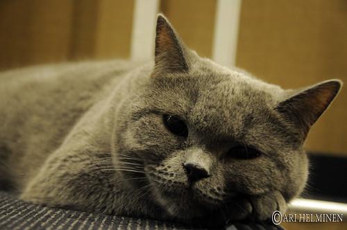 Cat cafe at Shinjuku