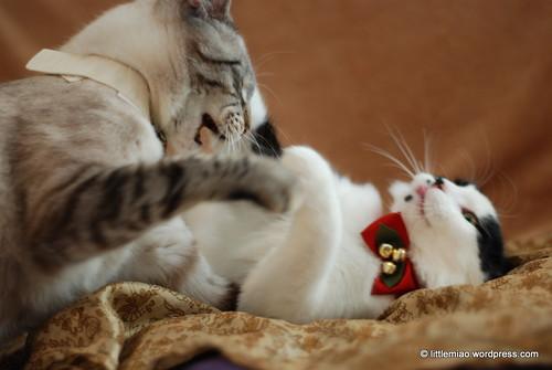 playtime 12-8-2011 1-35-04 PM