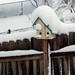 Snowed In, February 04, 2012