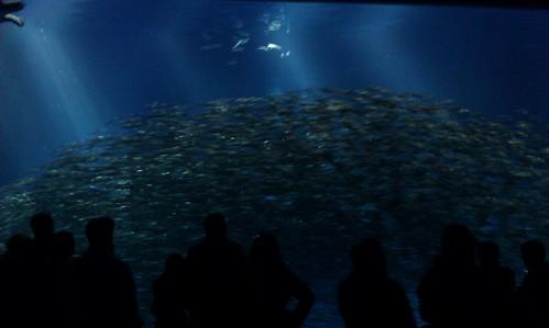People looking at the sardine school