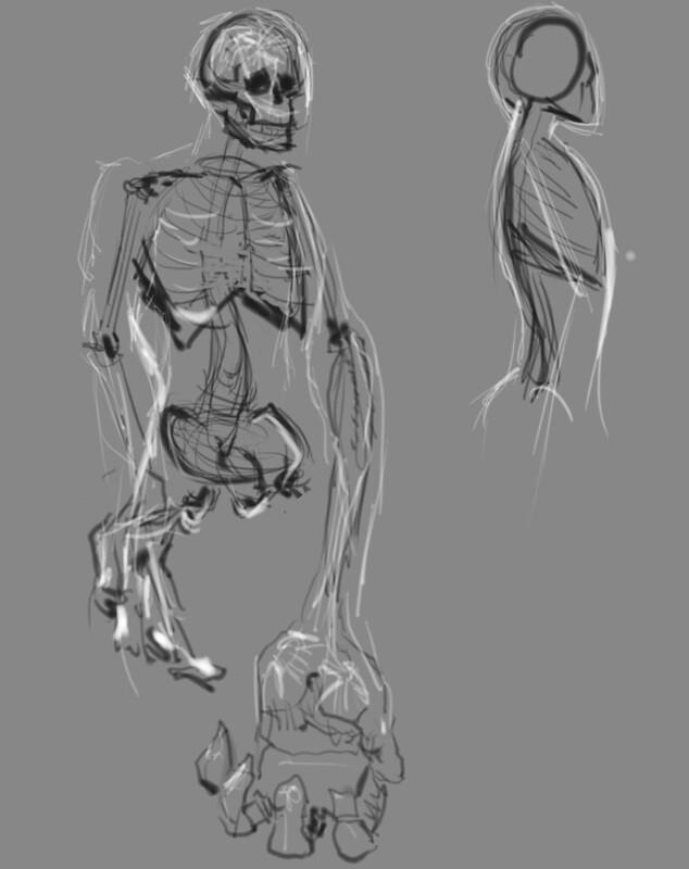 Anatomy study - Skeleton 1