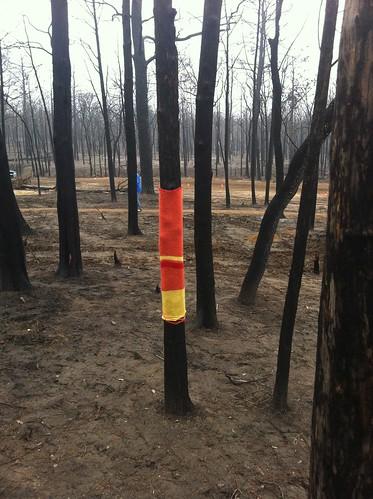 A Little Love for Burnt Trees