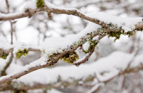 Snow2012-35