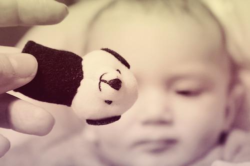 Little Panda by Rossella Sferlazzo