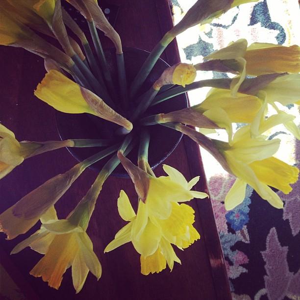 Flowers in February