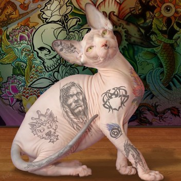 Animal Cruelty Laws helping cats Tattooed_cat