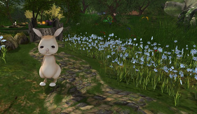 Bunny Now Has Ears