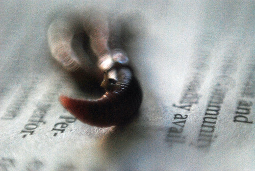 Picture of a worm on newspaper