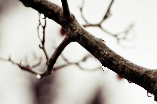 Drops 1