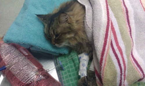 Poor Baby Kitty Meow