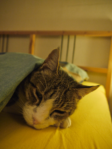 Bagha tucked in 1010095.jpg