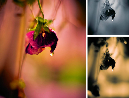 Different Processes by Terry Schmidbauer