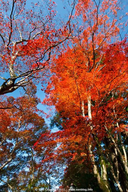 大阪有馬- 瑞寶寺公園