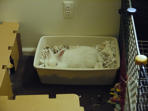 gus in the litter box