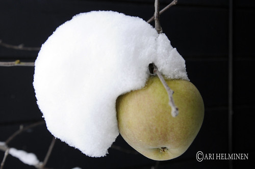 弘前市 Hirosaki City, Frozen apples