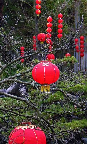 red lanterns in the garden