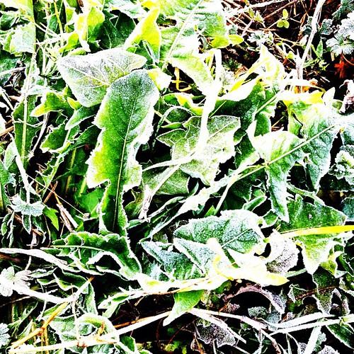 霜が… #iphonography #instagram #iphone4s