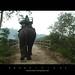 Back to pavilion - Kaziranga Elephant safari