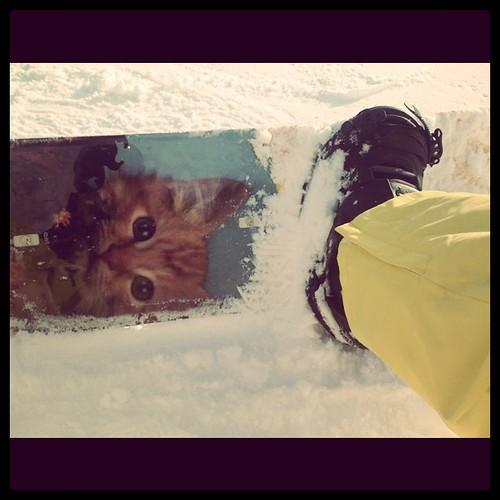 Bestes Snowboard der Welt. Mit #catcontent