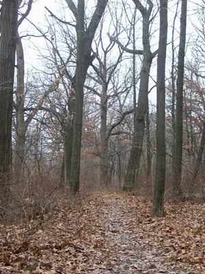 20120101_willow_springs_woods3