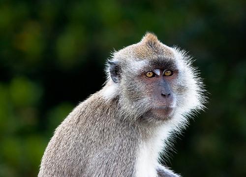 Monkey... by SkyStrike