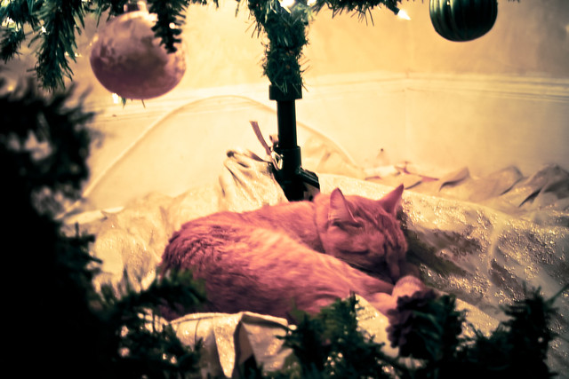 IElvis under the tree