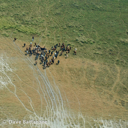 Namibian Cattle Herd