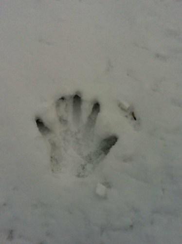 Handprint in the snow.