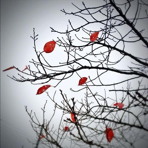 冬を待つ季節 #iphonography #instagram #iphone4s
