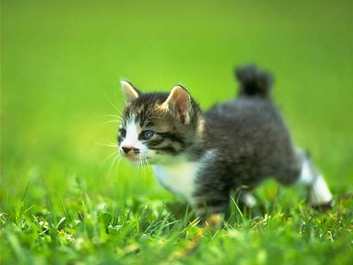 cat_0043