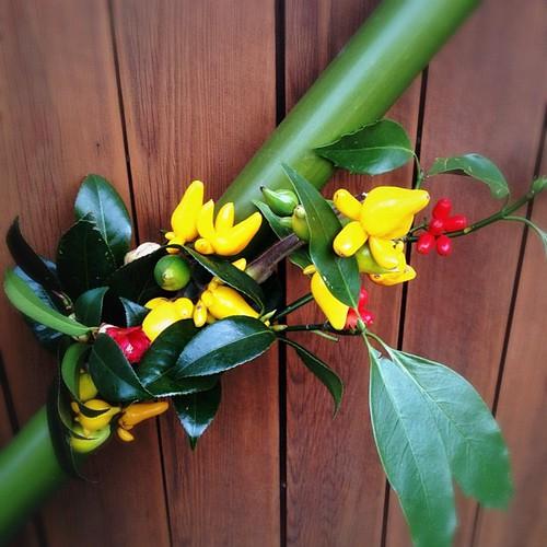 これなんて言う植物だろ? #iphonography #instagram #iphone4s