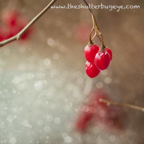 Crimson Berries, Part Two