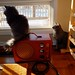 Jackson & Scooter, January 23, 2012