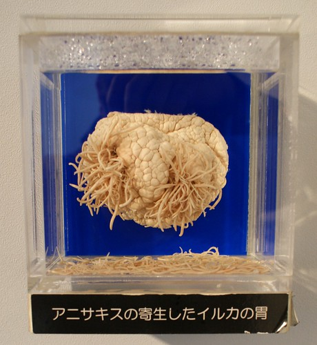 Anisakis infestation in dolphin stomach - Meguro Parasitological Museum