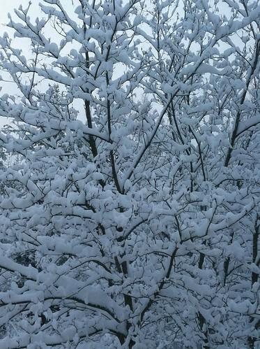 Talvinen puu by niini