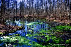 Woodland reflection.