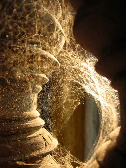 Spider net in Angkor Wat